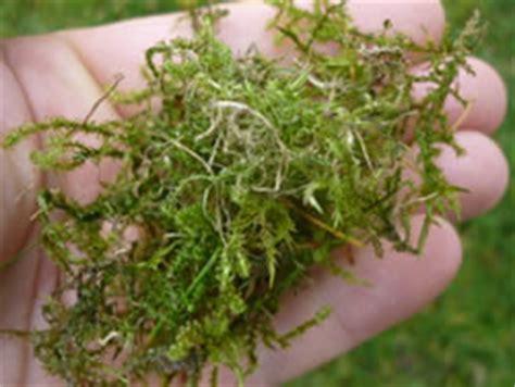 Vertikutieren Im Oktober by Rasen Vertikutieren