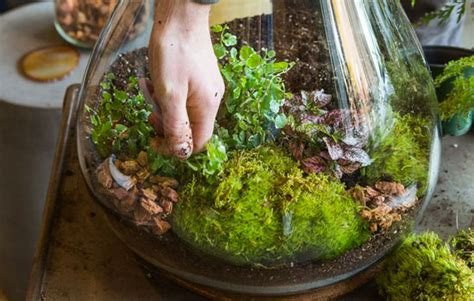 best plants for self contained terrarium how to make a self sustaining terrarium realestate au