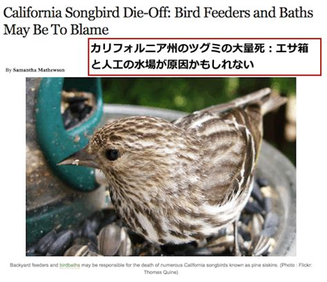 世界で再び始まった 鳥の大量死 の連続から思い至ったこと それは 現在の異常な動物の大量死は自分たちの現在と未来を