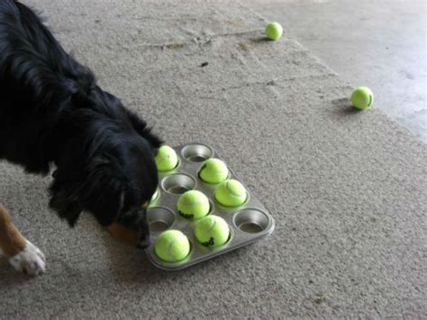 how to keep a puppy busy 12 rainy day entertainment ideas to keep your busy barkpost