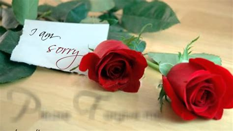 images of love sorry sorry apology love ecards greetings messages