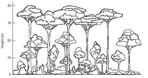 rainforest canopy coloring page las aventuras the canopy connection