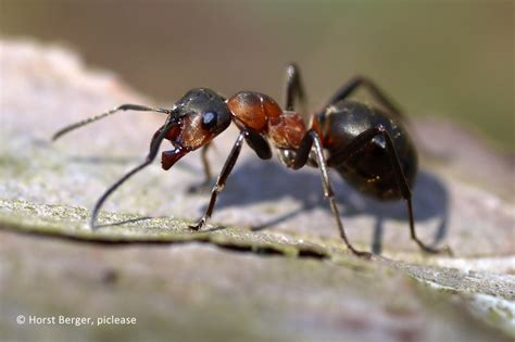 Gelbe Ameisen Im Garten 3820 by L 228 Stige Ameisen Vertreiben Landwirtschaftskammer