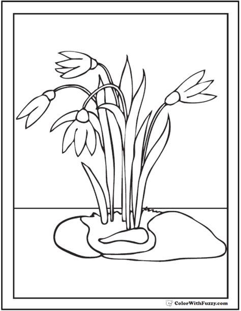 crocus flower coloring page free flower coloring pages crocus flower coloring page