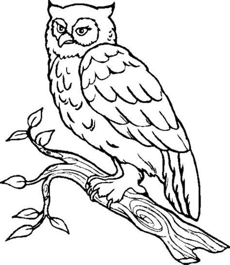 owl coloring pages coloring lab