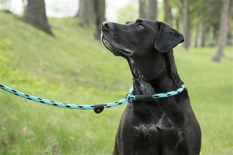 slip leads for dogs slip leads for dogs is a slip lead a choice for your pets potential