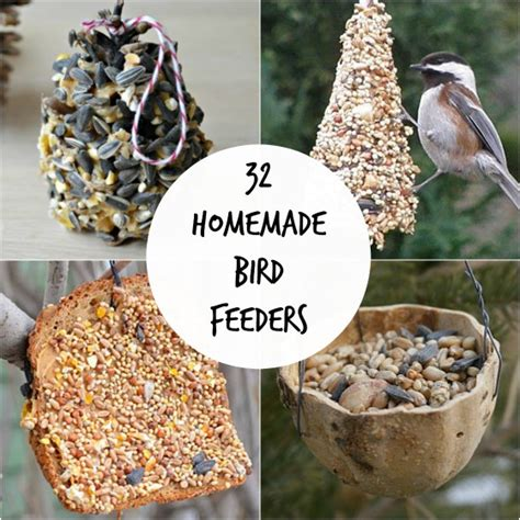 image gallery homemade bird food