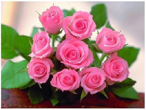 imagenes flores bellas gratis fotos de rosas rojas con frases de amor para enamorar