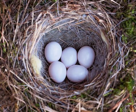 building a birds nest a metaphor for my writing life
