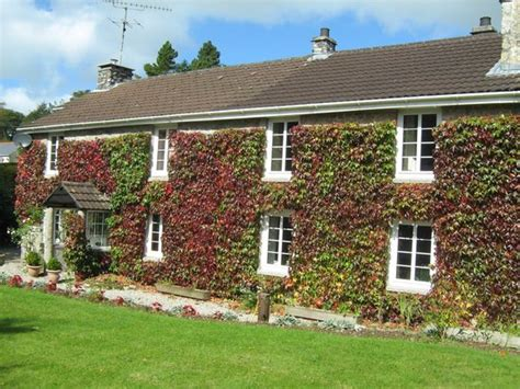 Ivys Cottage by Cottage B B Updated 2017 Guest House Reviews