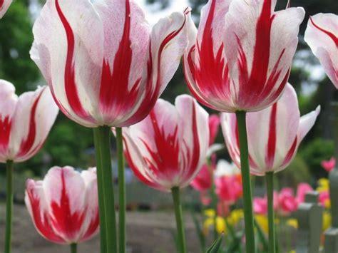 gambar sketsa kumpulan gambar sketsa bunga pemandangan