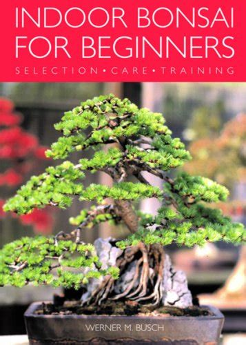 indoor bonsai for beginners indoor bonsai for beginners selection care training toolfanatic com