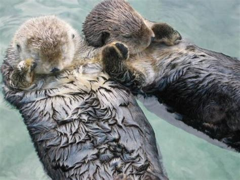 otter schlafen vergewaltigung nekrophilie kindsmord das sind die