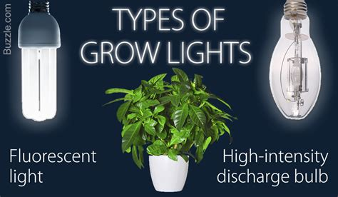 types of grow lights a brief guide to choosing the best grow lights for indoor
