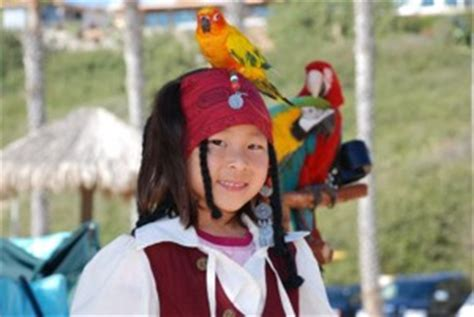 pirate themed party entertainers parrots for parties and events we have parrot shows and