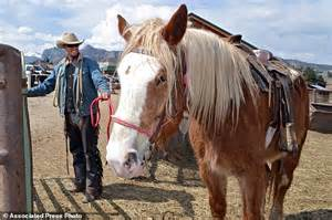 how many pony in a pound wranglers in west forced to find horses for riders