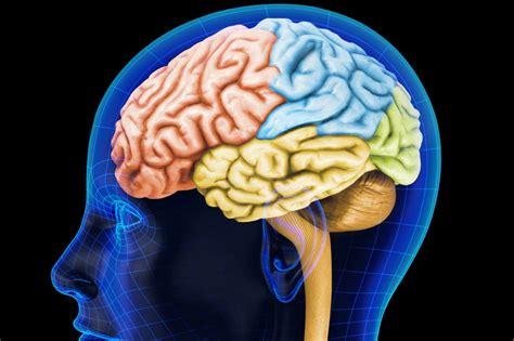 imagenes de el cerebro humano misi 243 n mapear el cerebro humano elespectador com