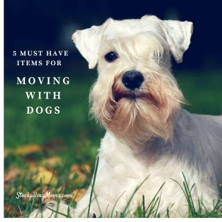 must dogs 5 places to save money when building a home