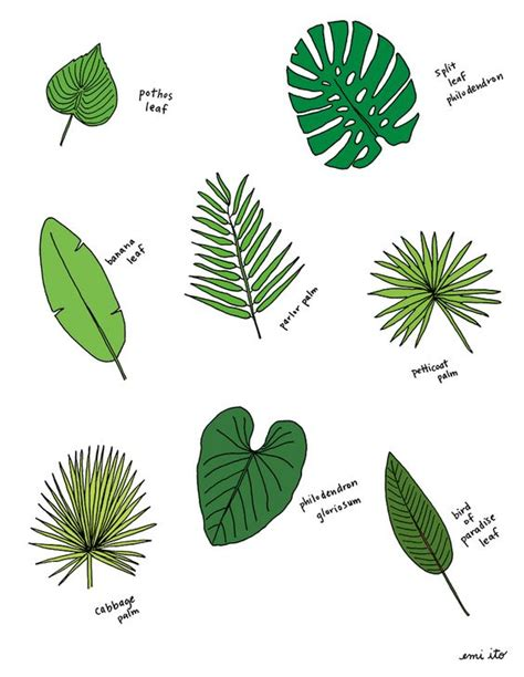 different types of tropical plants trees flowers palm leaves beautiful different types of and search