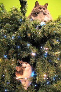 Online Sweepstakes Com Down - how cats put up a christmas tree and take it down as well online sweepstakes com