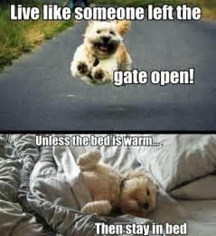 hilarious memes photos