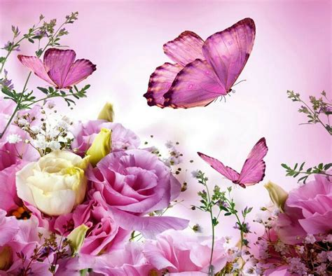 beautiful flower wallpaper zedge butterfly butterfly pinterest
