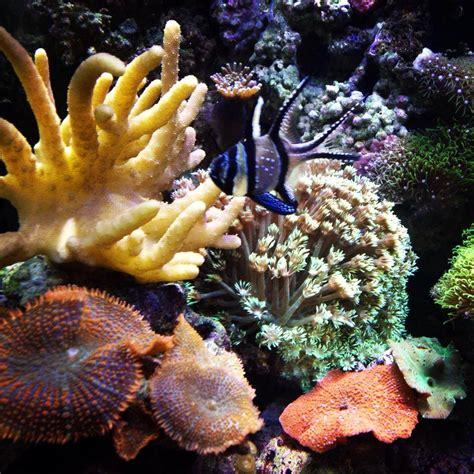 ocean design aquarium reviews aquarium design ocean state aquatics