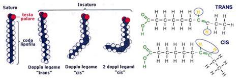 acidi grassi saturi e insaturi alimentazione lipidi saponificabili e insaponificabili