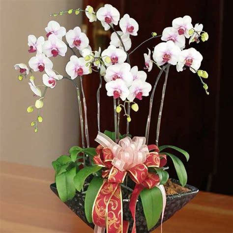 new year flower types singapore congratulations flowers congratulation flower