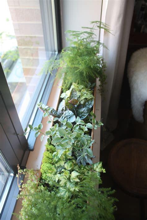 kitchen window terrarium the window diy a terrarium inspired window box lonny