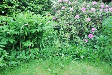 singvögel im garten rhododendronbeet