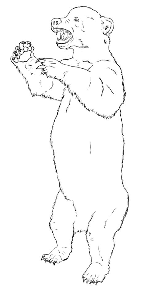 Drawing Of A Standing Up by Standing Grizzly Drawings Realistic Www Pixshark