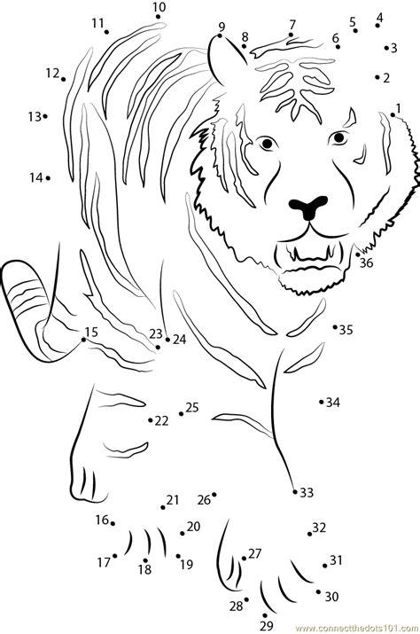 printable tiger dot to dot tiger walking towards dot to dot printable worksheet
