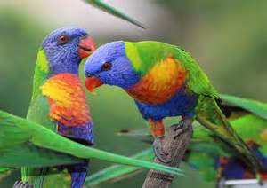 rainbow lorikeets a little way from the writer s room
