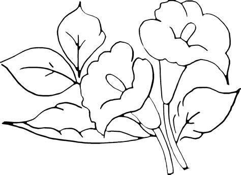imagenes para pintar de flores nubia caroline google