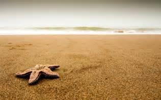 Starfish coast beach sand particles cloudy 53057 1920x1200 jpg