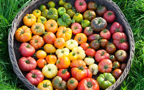 seeds  totally tasty tomatoes telegraph