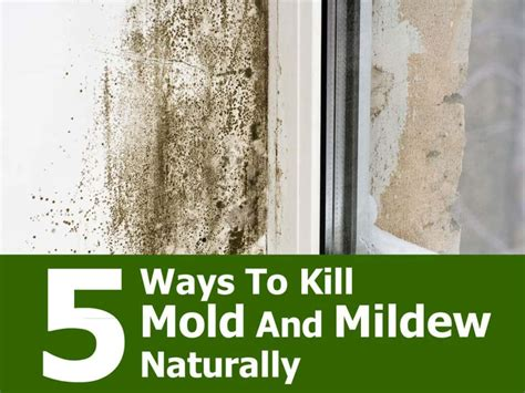 best way to kill mold in bathroom 5 ways to kill mold and mildew naturally