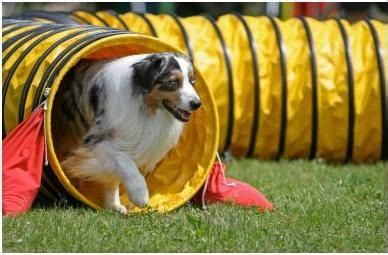 agility course near me 25 best ideas about agility for dogs on agility agility