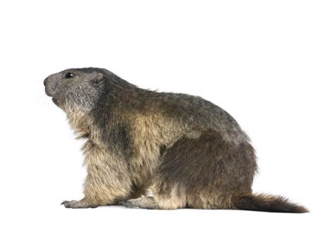 groundhog day quizlet the best way to future proof education is by learning from