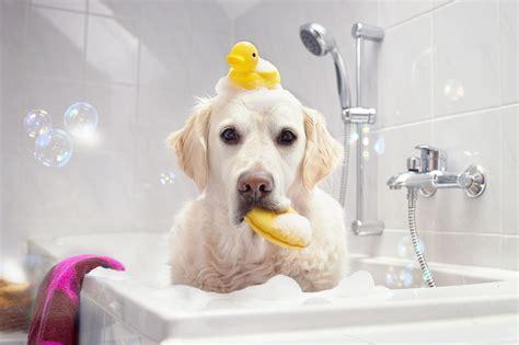 bad fur days pet product news february