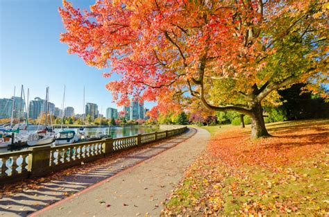 Stanley Park in Vancouver, Canada jigsaw puzzle in Great