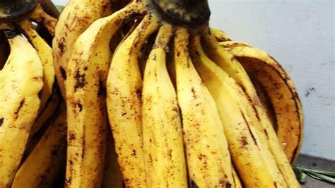 pisang nangka gitacintacom