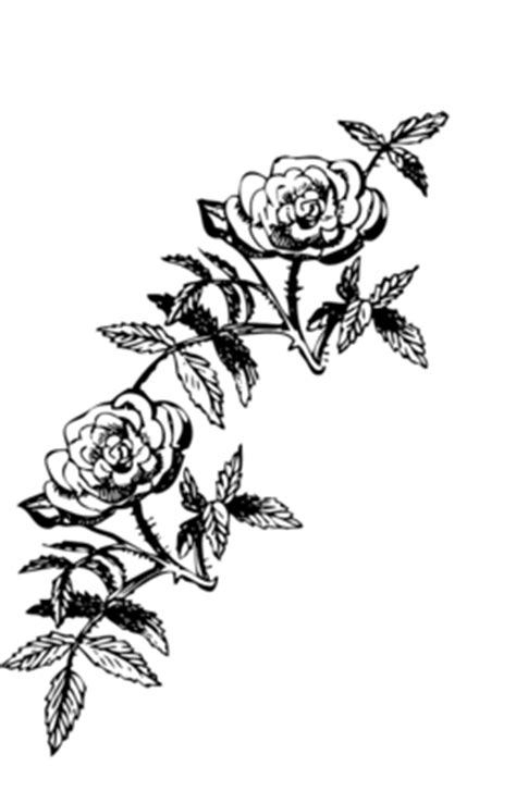 rose decoration clipart iclipart royalty  public