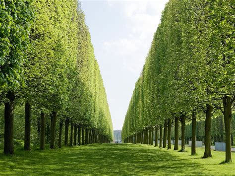 beautiful picture 12 greenery travel destinations which pantone would