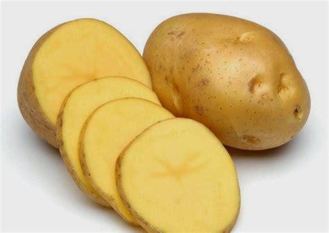 Bibit Kentang daftar harga bibit kentang tanah tercintaku