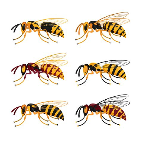 Original Reg A Free Used Bee hornet free vector 906 free downloads
