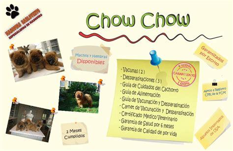 cuanto sale un chow chow gran oferta cachorros chow chow peludos genuino registro