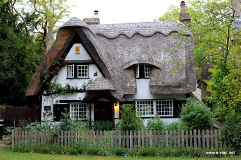 thatched roofs cottage in the woods