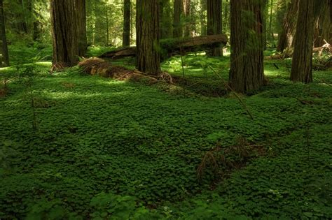 From The Forest Flooring by